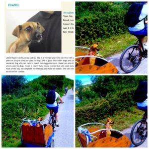 Elsie on The Camel Trail